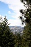 Montanhas e árvores Imagens de Stock