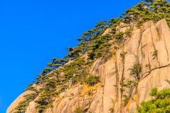 Montanhas e árvores de Huangshan Imagens de Stock Royalty Free