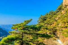 Montanhas e árvores de Huangshan Foto de Stock