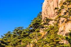 Montanhas e árvores de Huangshan Fotografia de Stock Royalty Free