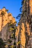 Montanhas e árvores de Huangshan Imagens de Stock