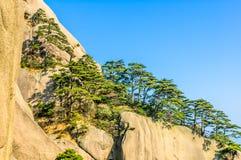 Montanhas e árvores de Huangshan Foto de Stock Royalty Free