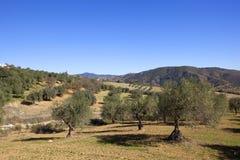 Montanhas e bosques verde-oliva da Andaluzia na Espanha do sul Imagem de Stock Royalty Free