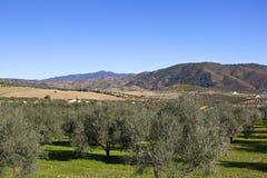 Montanhas e bosques verde-oliva da Espanha do sul Fotografia de Stock