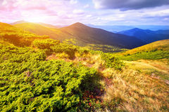 Montanhas e campo da paisagem sob o céu azul Imagens de Stock