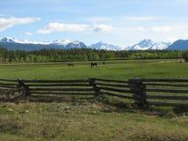 Montanhas e cavalos Fotos de Stock Royalty Free