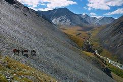 Montanhas e cavalos azuis Fotos de Stock Royalty Free