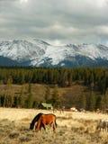 Montanhas e cavalos de Colorado imagem de stock