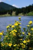 Montanhas e flores Fotografia de Stock