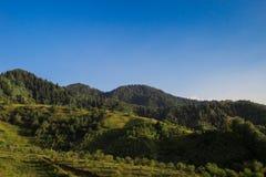 Montanhas e floresta Fotos de Stock Royalty Free