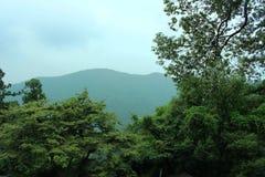 Montanhas e floresta imagens de stock