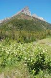Montanhas e florestas Fotografia de Stock