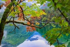 Montanhas e florestas imagens de stock