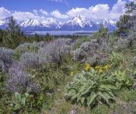Montanhas e lago da distância Imagem de Stock Royalty Free