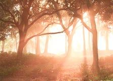 Montanhas e nascer do sol nevoento imagens de stock royalty free