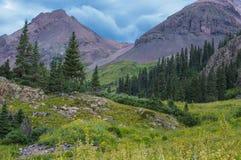 Montanhas e pinheiros Fotografia de Stock