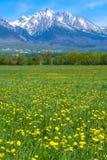 Montanhas e prado Foto de Stock Royalty Free