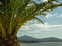 Montanhas e praia da palmeira Imagem de Stock