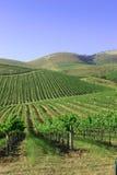 Montanhas e vinhedos Imagem de Stock Royalty Free