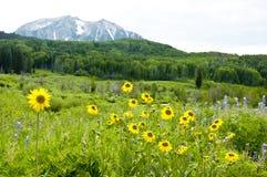 Montanhas e wildflowers tampados neve Fotos de Stock