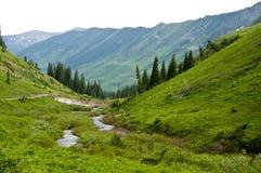 Montanhas e wildflowers tampados neve Imagem de Stock Royalty Free