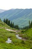 Montanhas e wildflowers tampados neve Foto de Stock Royalty Free
