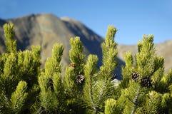 Montanhas elevadas de Tatras Fotos de Stock