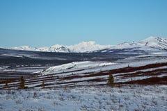 Montanhas em Denali fotos de stock