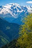 Montanhas em Geórgia, foto vertical Imagem de Stock Royalty Free