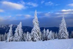 Montanhas em uma manhã e em umas árvores de Natal verdes cobertos de neve Fundo maravilhoso do inverno Feriado bonito do Natal Foto de Stock