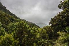 Montanhas enevoadas de Rabacal em Madeira Imagens de Stock