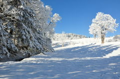 Montanhas gigantes/Karkonosze, inverno de Karpacz Fotografia de Stock Royalty Free