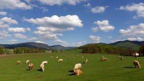 Montanhas hory de Jizerské Jizera, Czechia imagens de stock royalty free