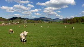 Montanhas hory de Jizerské Jizera, Czechia Imagem de Stock