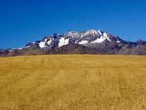 Montanhas não nevado do campo de trigo no horizonte Fotografia de Stock
