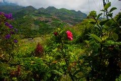 Montanhas nas nuvens, nas vilas e nos montes com campos Sabah, Bornéu, Malásia imagens de stock royalty free