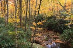 Montanhas NC de Autumn Foliage Blue Ridge Appalachian foto de stock royalty free