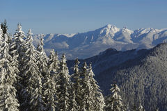 Montanhas nevado de Ciucas, Romênia Imagem de Stock Royalty Free