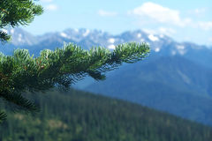 Montanhas noroestes pacíficas Imagens de Stock Royalty Free