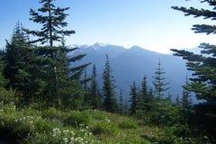 Montanhas noroestes pacíficas Foto de Stock Royalty Free
