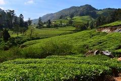 Montanhas onduladas altas de Meghamalai - Paradise escondido imagens de stock