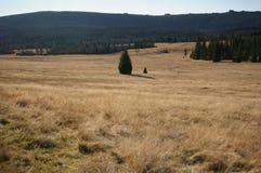 Montanhas, prados, verão imagens de stock royalty free