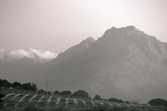 Montanhas preto e branco sobre o vinhedo Fotografia de Stock