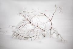 Montanhas recolhidas do detalhe do inverno foto bonita Fotos de Stock