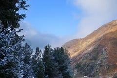 Montanhas rochosas de Zaili Alatau cobertas pela neve com a linha de floresta dos pinheiros Imagem de Stock