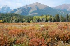 Montanhas rochosas do outono Imagem de Stock