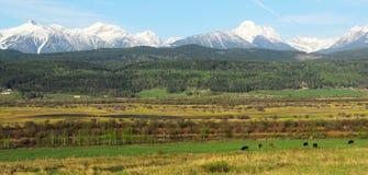 Montanhas rochosas e explorações agrícolas Imagens de Stock Royalty Free