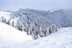 Montanhas Romênia de CiucaÅŸ imagem de stock