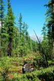 Montanhas, shumack, o Lago Baikal, rio, água, viagem, abeto vermelho, floresta, montanha, Rússia fotografia de stock