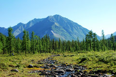Montanhas, shumack, o Lago Baikal, rio, água, viagem, abeto vermelho, floresta, montanha, Rússia Imagem de Stock